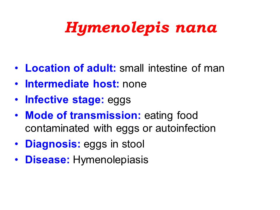 Hymenolepis nana Location of adult: small intestine of man