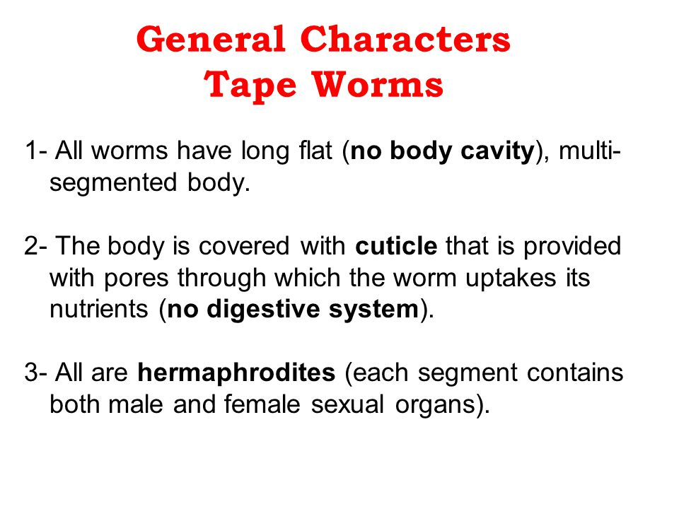 General Characters Tape Worms