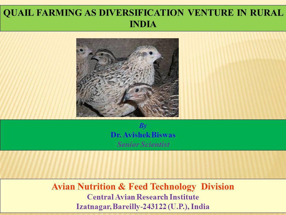QUAIL FARMING AS DIVERSIFICATION VENTURE IN RURAL INDIA