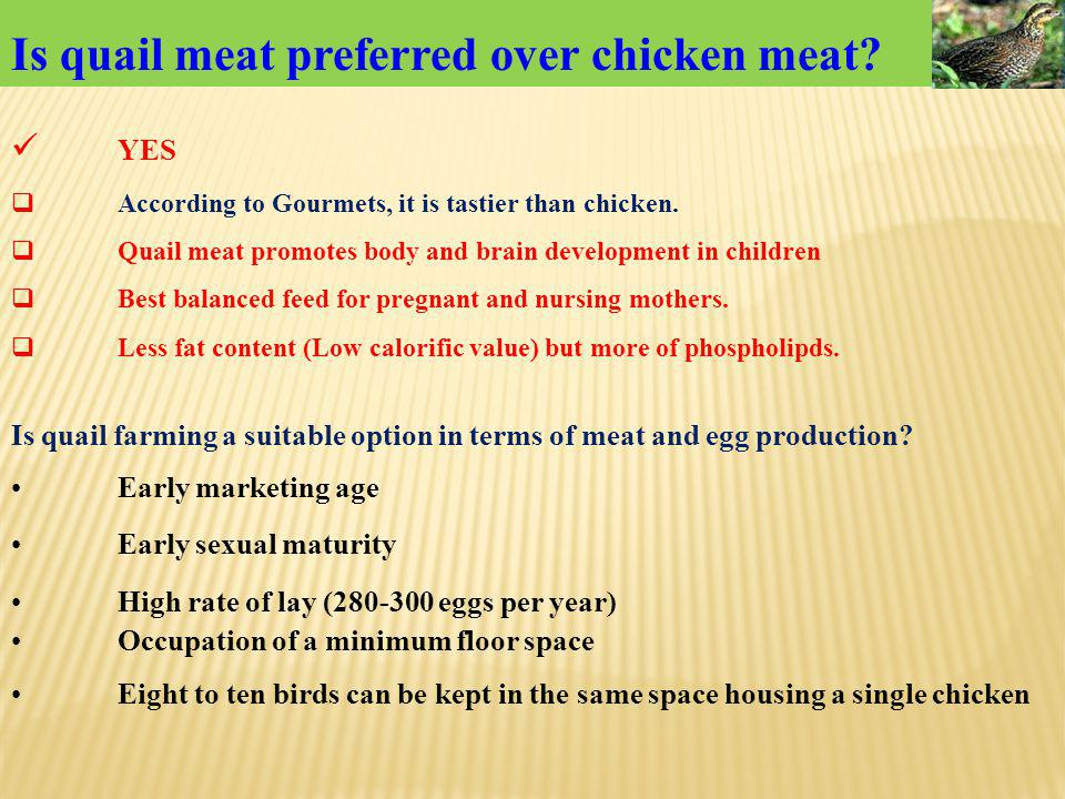 Is quail meat preferred over chicken meat
