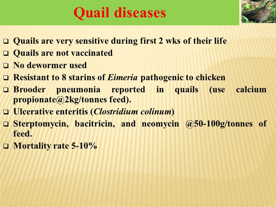 Quail diseases Quails are very sensitive during first 2 wks of their life. Quails are not vaccinated.