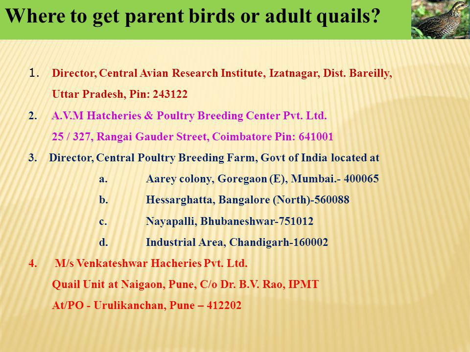 Where to get parent birds or adult quails