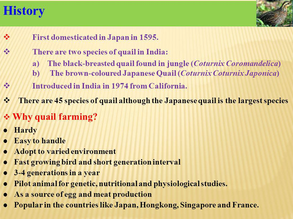 History First domesticated in Japan in 1595.