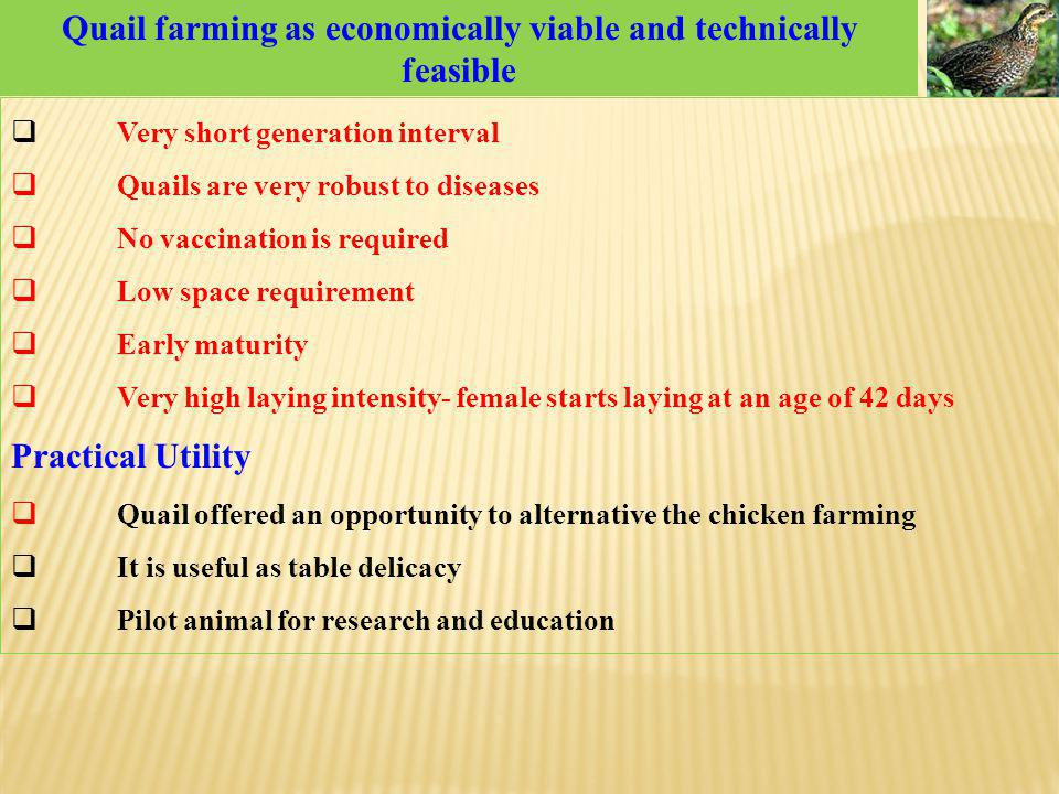 Quail farming as economically viable and technically feasible