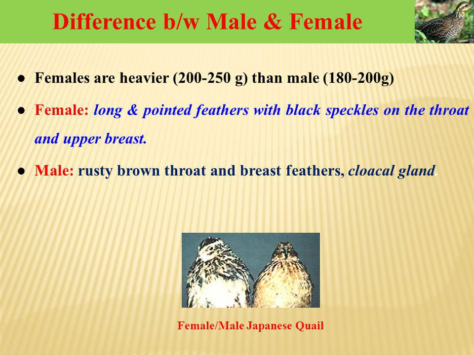 Difference b/w Male & Female