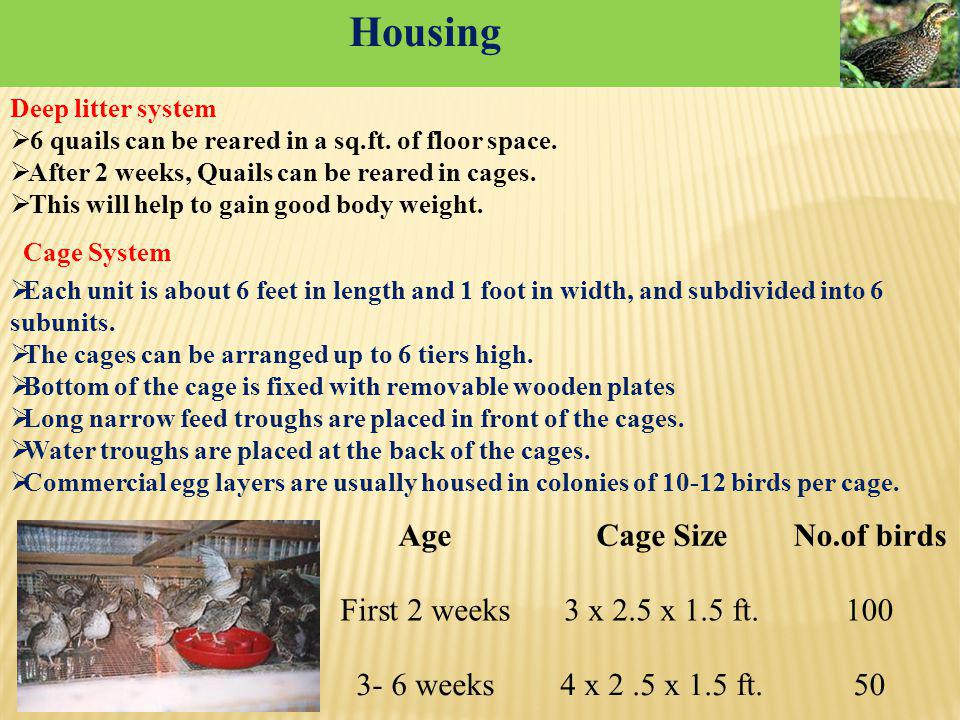 Housing Age Cage Size No.of birds First 2 weeks 3 x 2.5 x 1.5 ft. 100