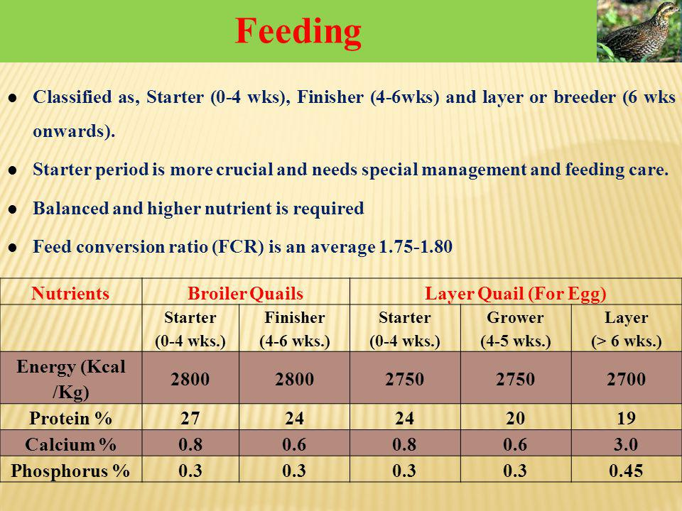Feeding Classified as, Starter (0-4 wks), Finisher (4-6wks) and layer or breeder (6 wks onwards).