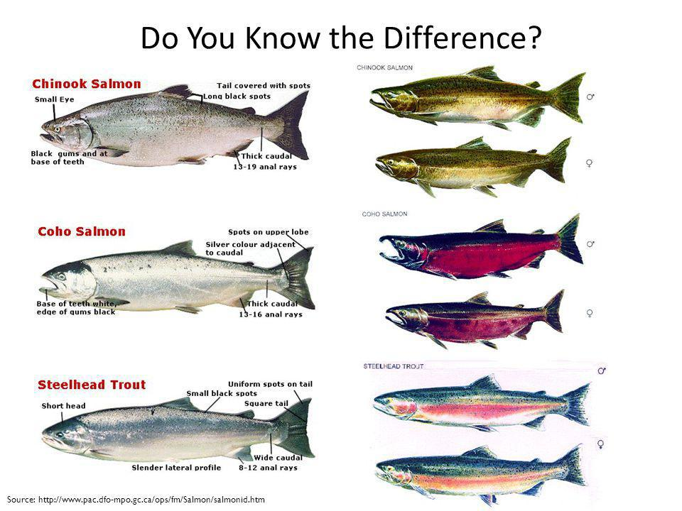 Do You Know the Difference
