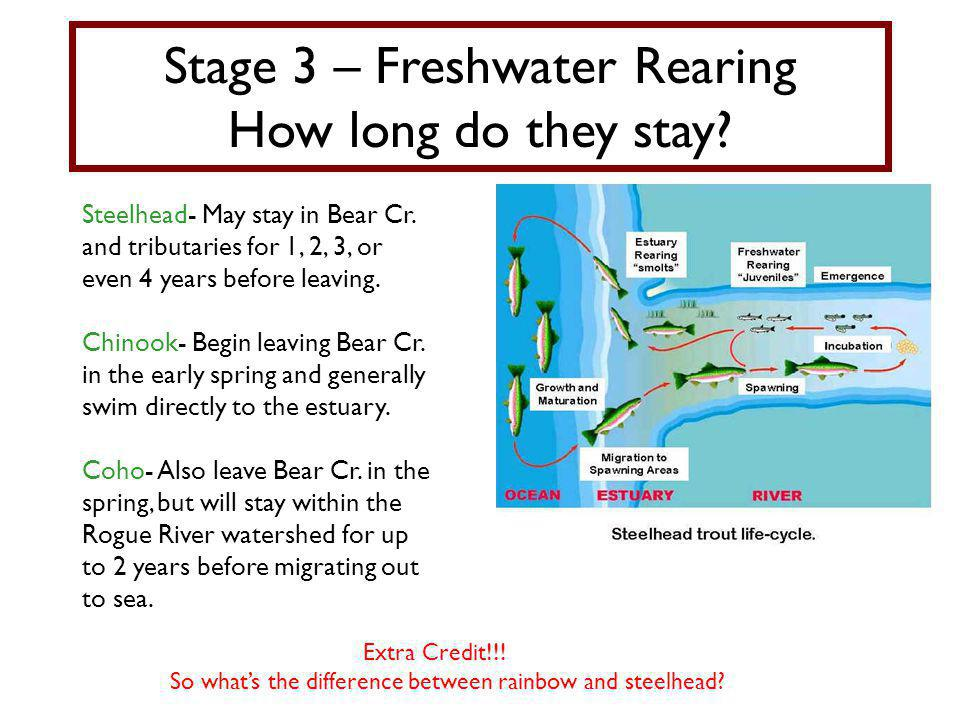 Stage 3 – Freshwater Rearing How long do they stay