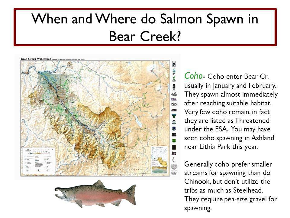When and Where do Salmon Spawn in Bear Creek