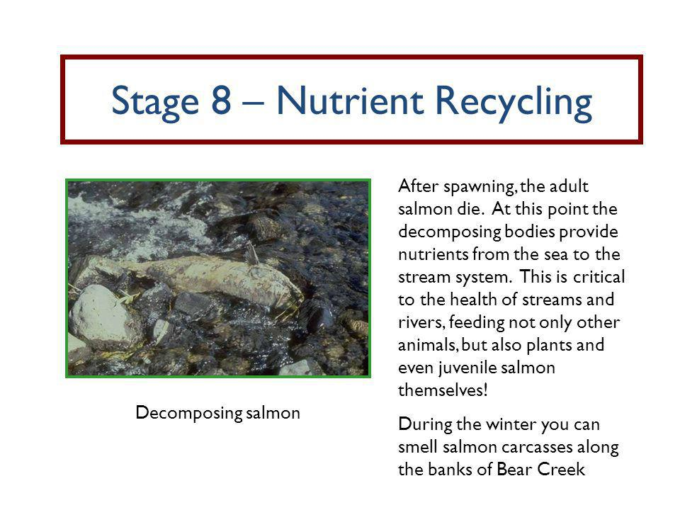 Stage 8 – Nutrient Recycling