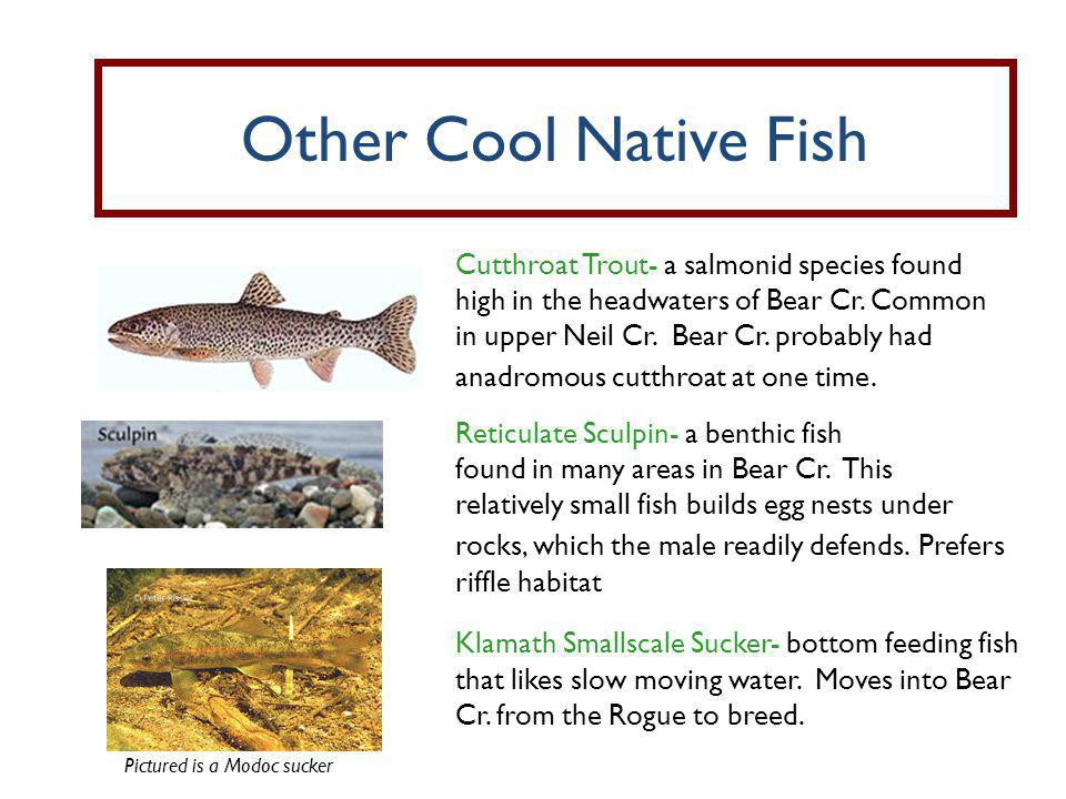 Other Cool Native Fish