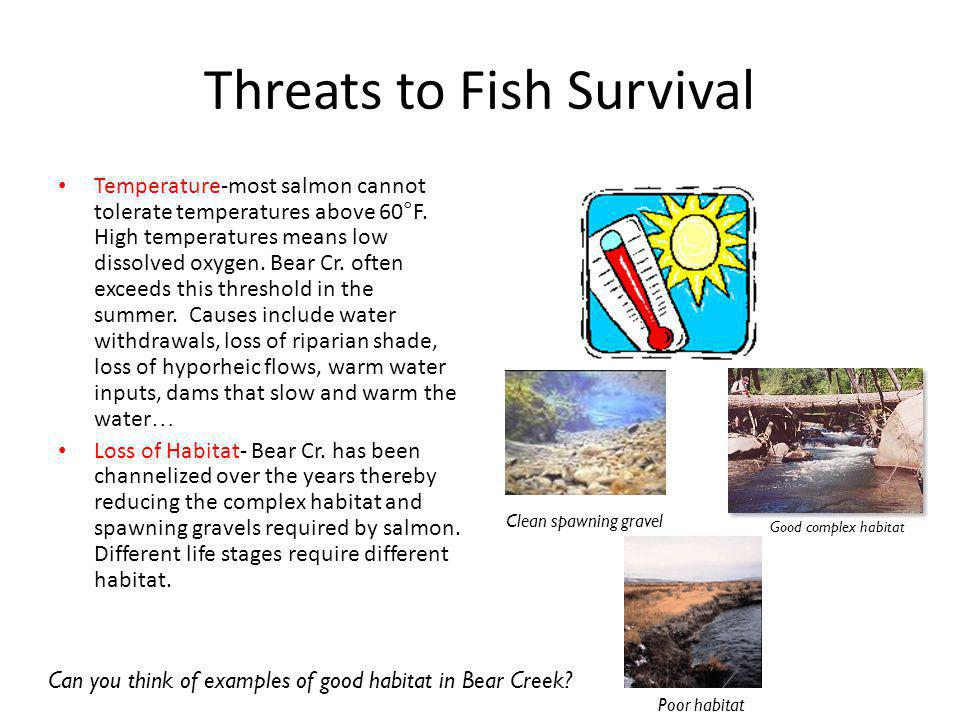 Threats to Fish Survival