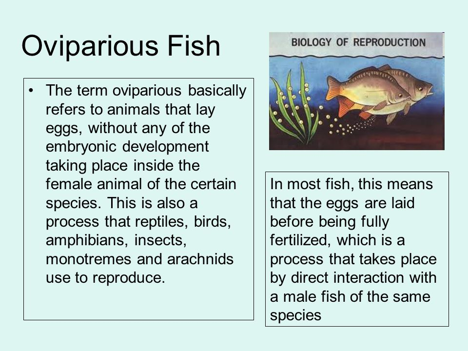 Oviparious Fish