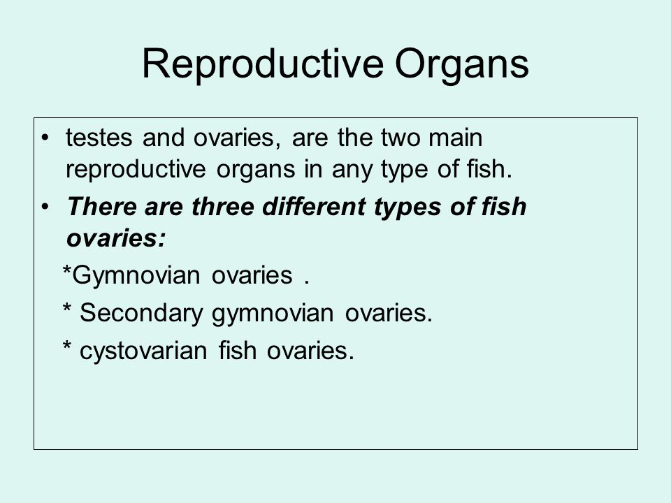 Reproductive Organs testes and ovaries, are the two main reproductive organs in any type of fish. There are three different types of fish ovaries: