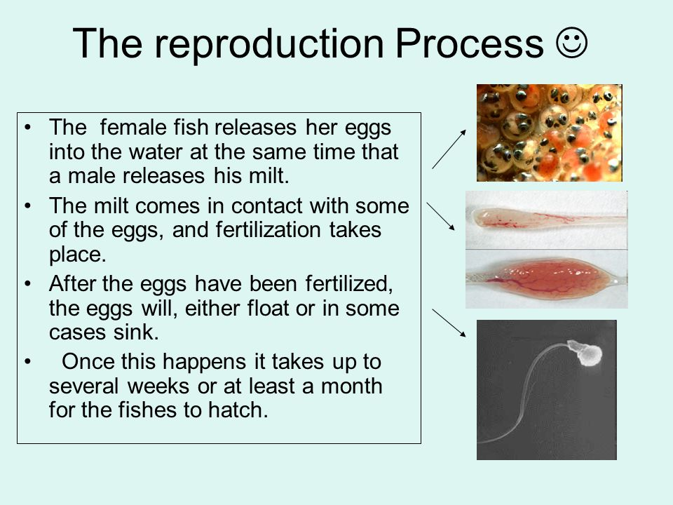 The reproduction Process 