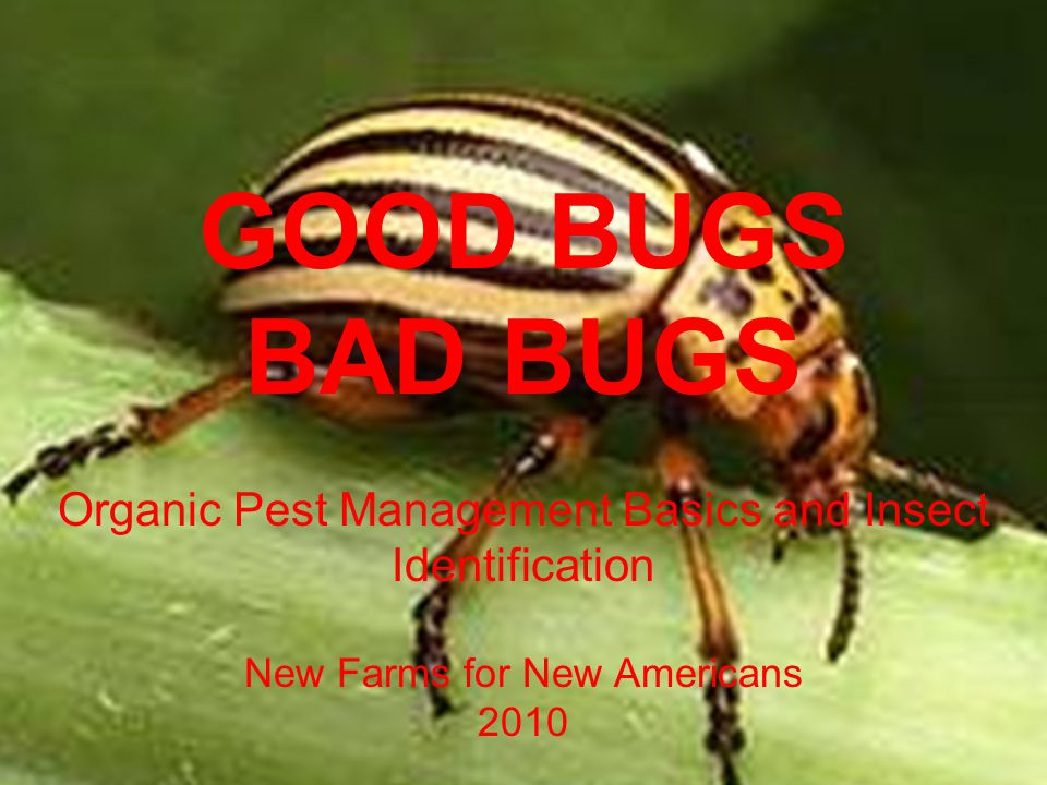 GOOD BUGS BAD BUGS. Organic Pest Management Basics and Insect Identification. New Farms for New Americans.