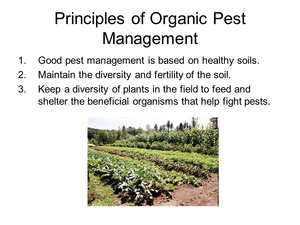 Principles of Organic Pest Management