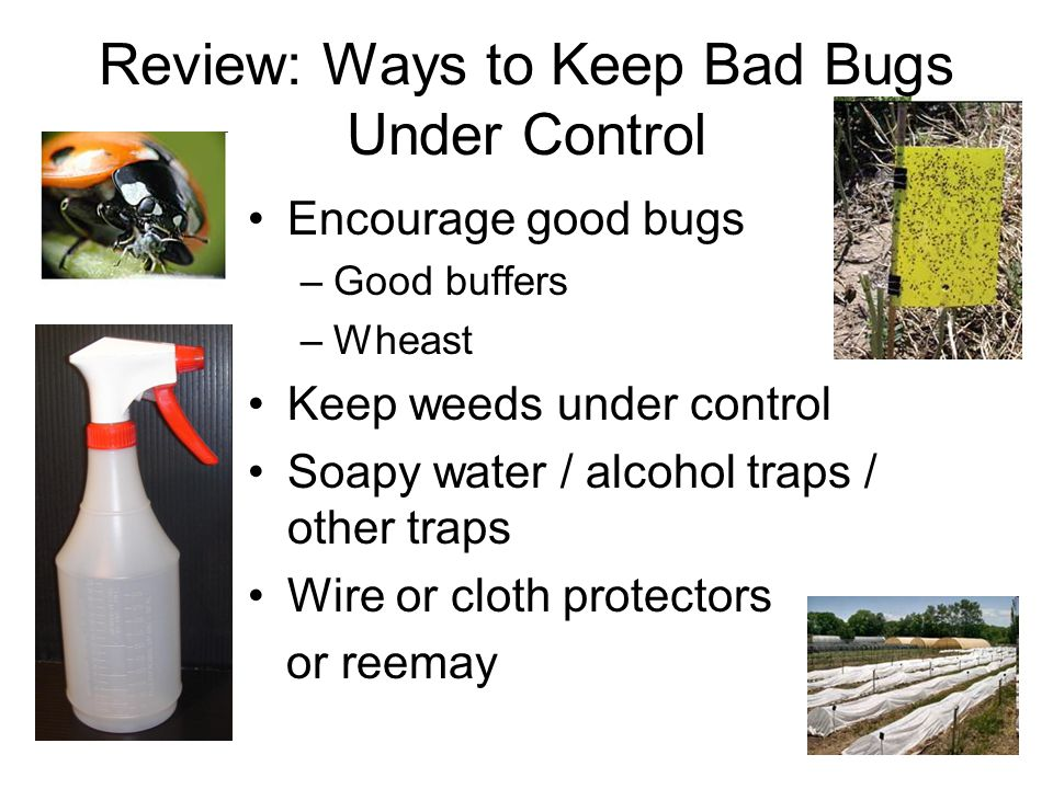Review: Ways to Keep Bad Bugs Under Control