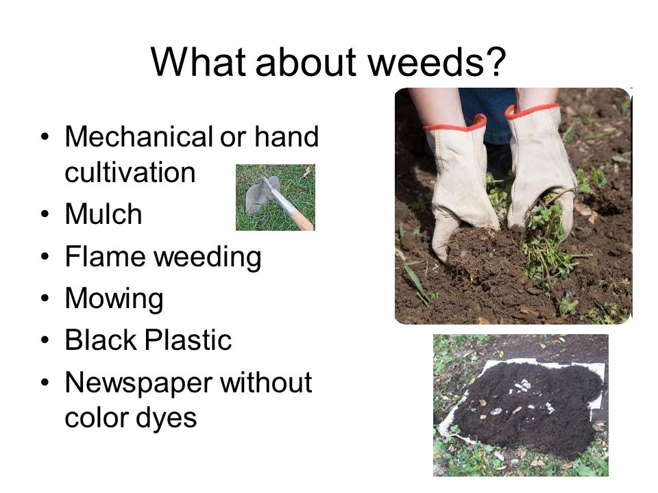 What about weeds Mechanical or hand cultivation Mulch Flame weeding