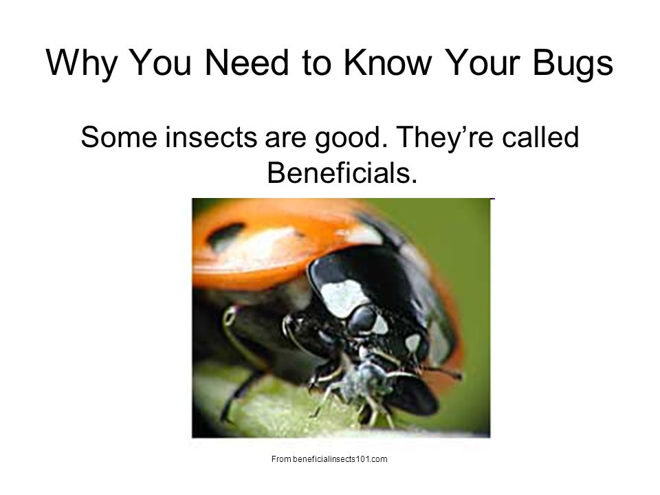 Why You Need to Know Your Bugs