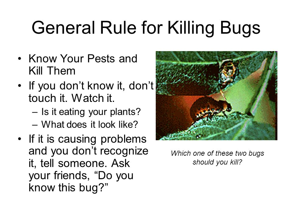 General Rule for Killing Bugs