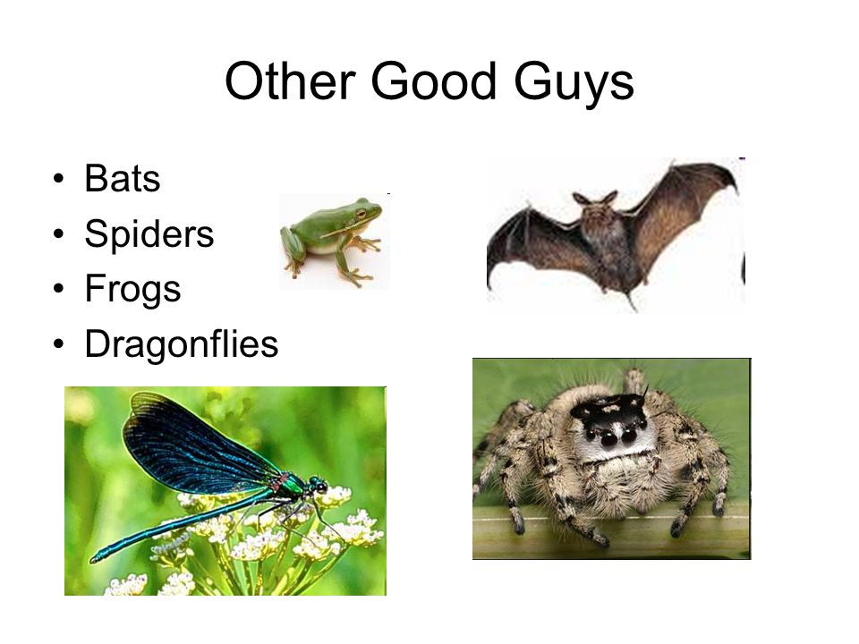 Other Good Guys Bats Spiders Frogs Dragonflies