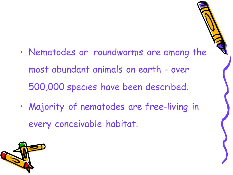 Nematodes or roundworms are among the most abundant animals on earth - over 500,000 species have been described.