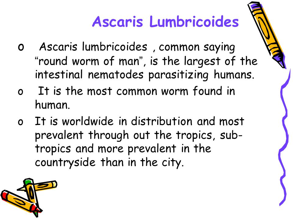 Ascaris Lumbricoides Ascaris lumbricoides , common saying round worm of man , is the largest of the intestinal nematodes parasitizing humans.