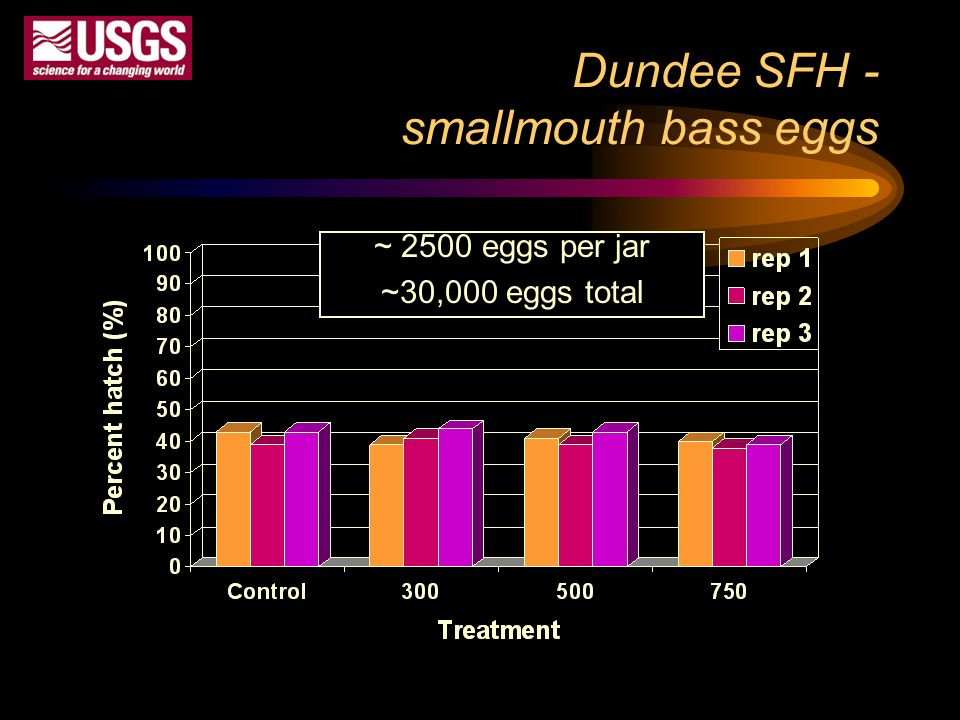 Dundee SFH - smallmouth bass eggs