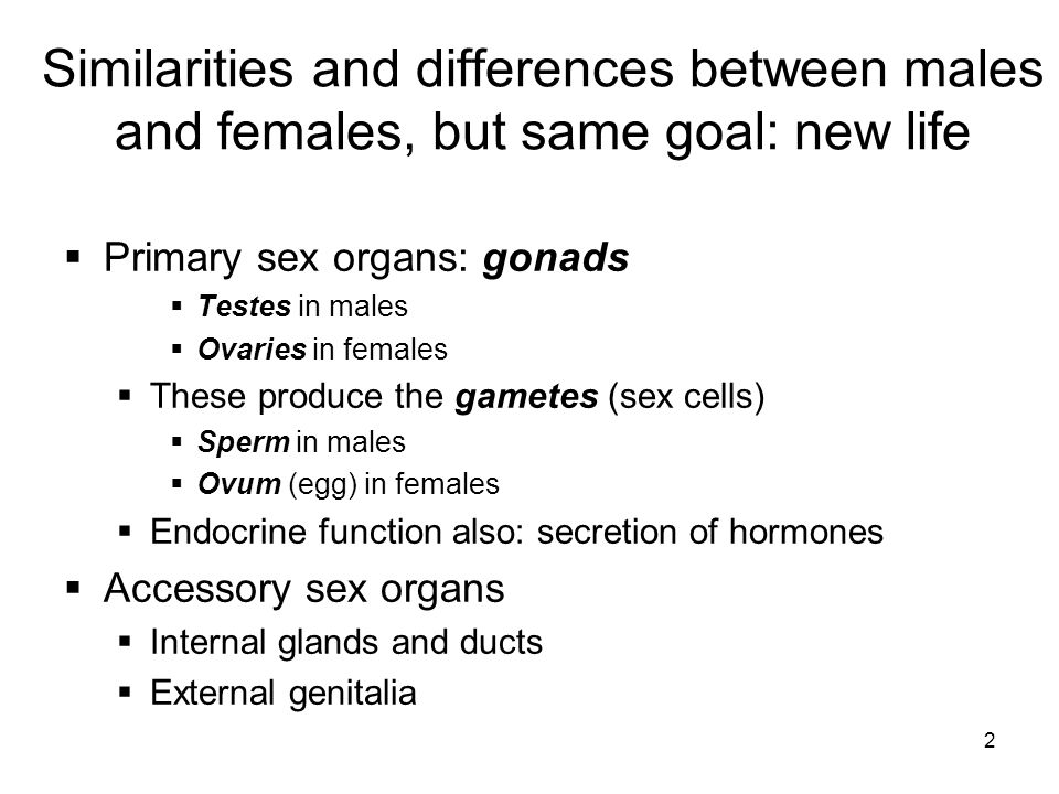 Similarities and differences between males and females, but same goal: new life
