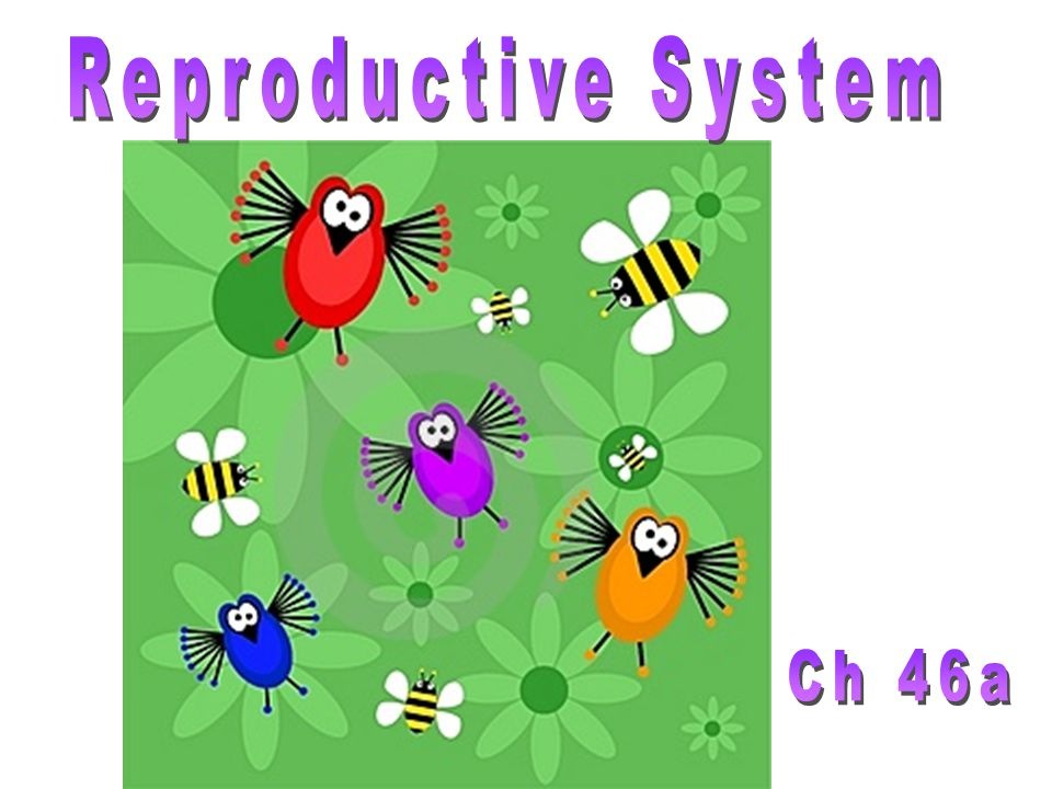 Reproductive System Ch 46a