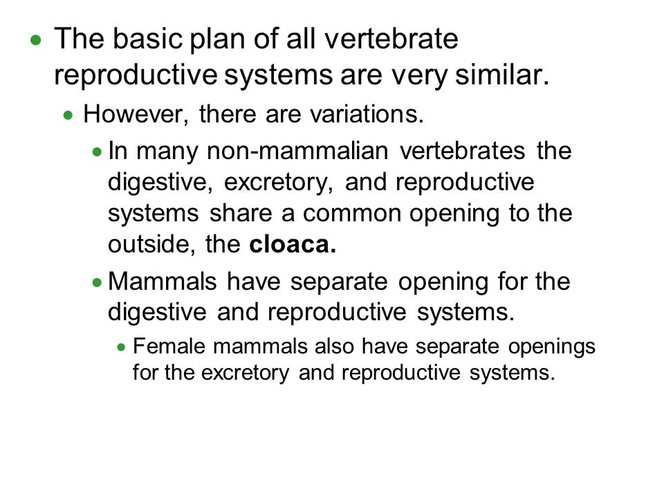 The basic plan of all vertebrate reproductive systems are very similar.