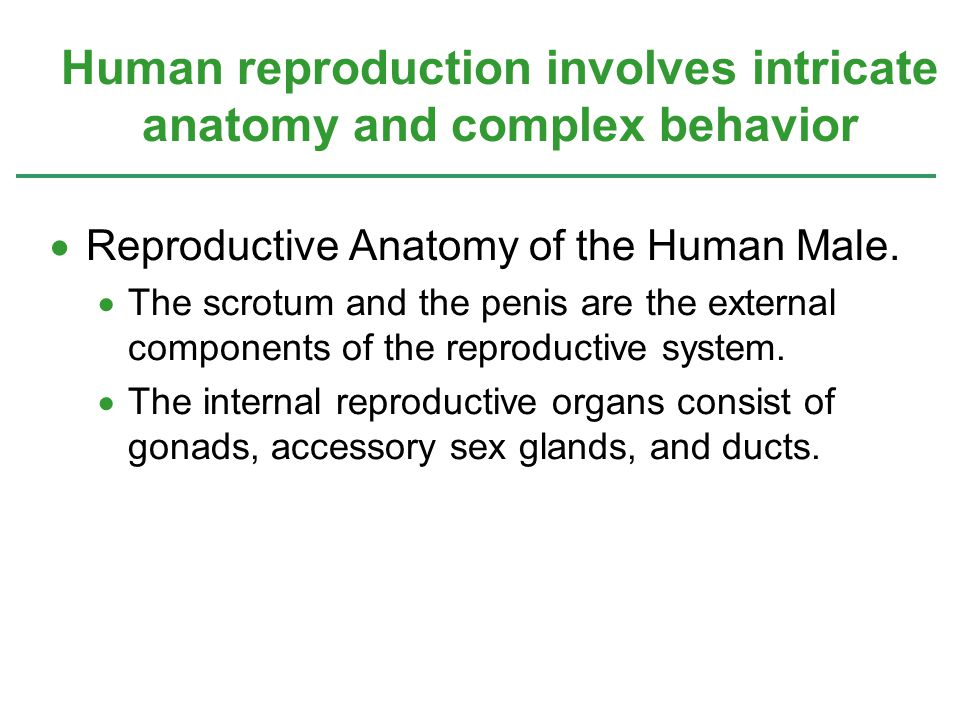 Human reproduction involves intricate anatomy and complex behavior