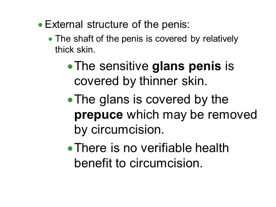 The sensitive glans penis is covered by thinner skin.