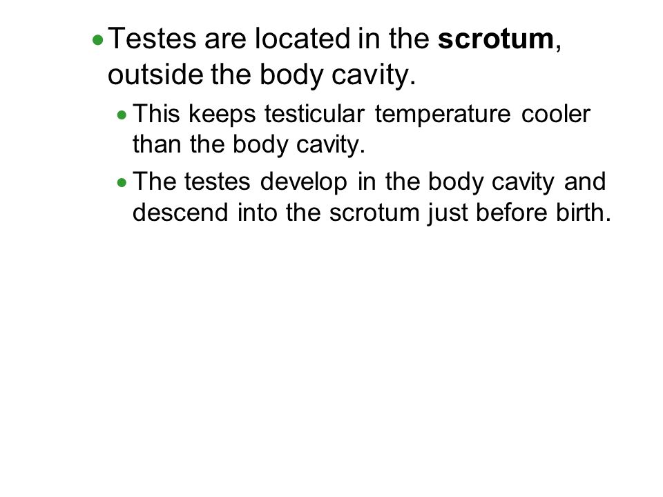 Testes are located in the scrotum, outside the body cavity.