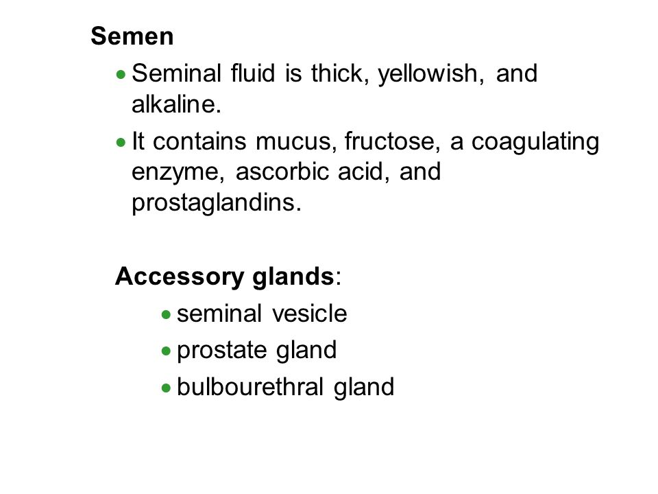 Semen Seminal fluid is thick, yellowish, and alkaline. It contains mucus, fructose, a coagulating enzyme, ascorbic acid, and prostaglandins.