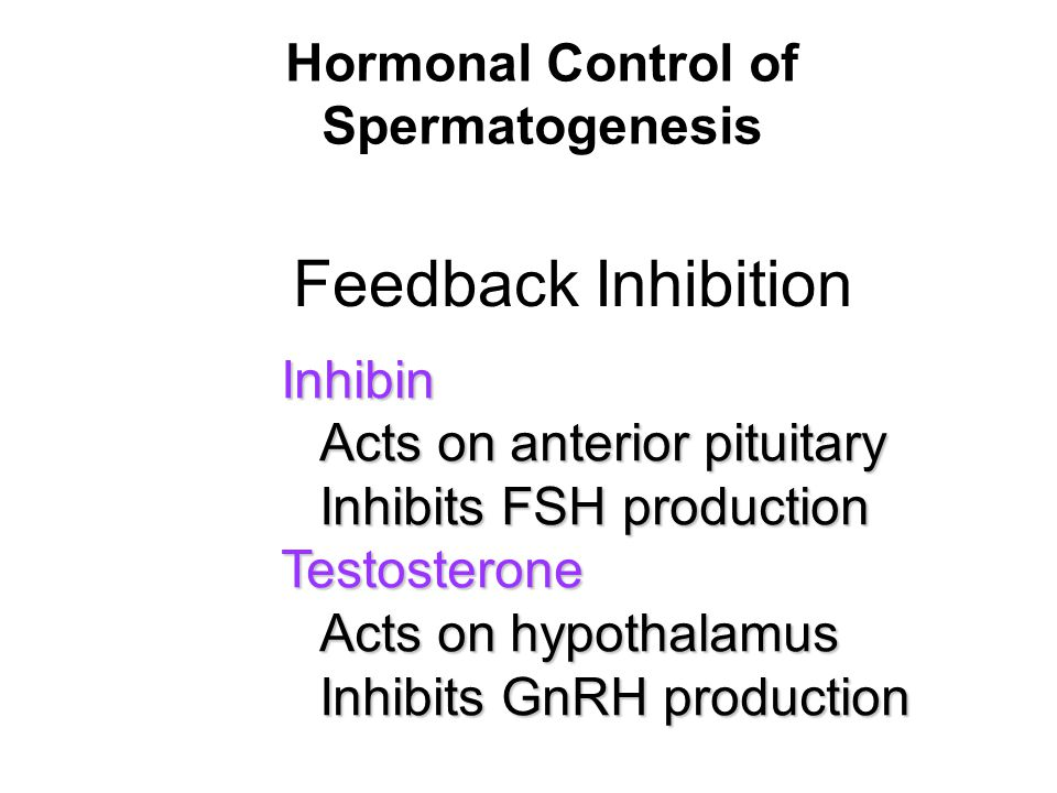 Hormonal Control of Spermatogenesis
