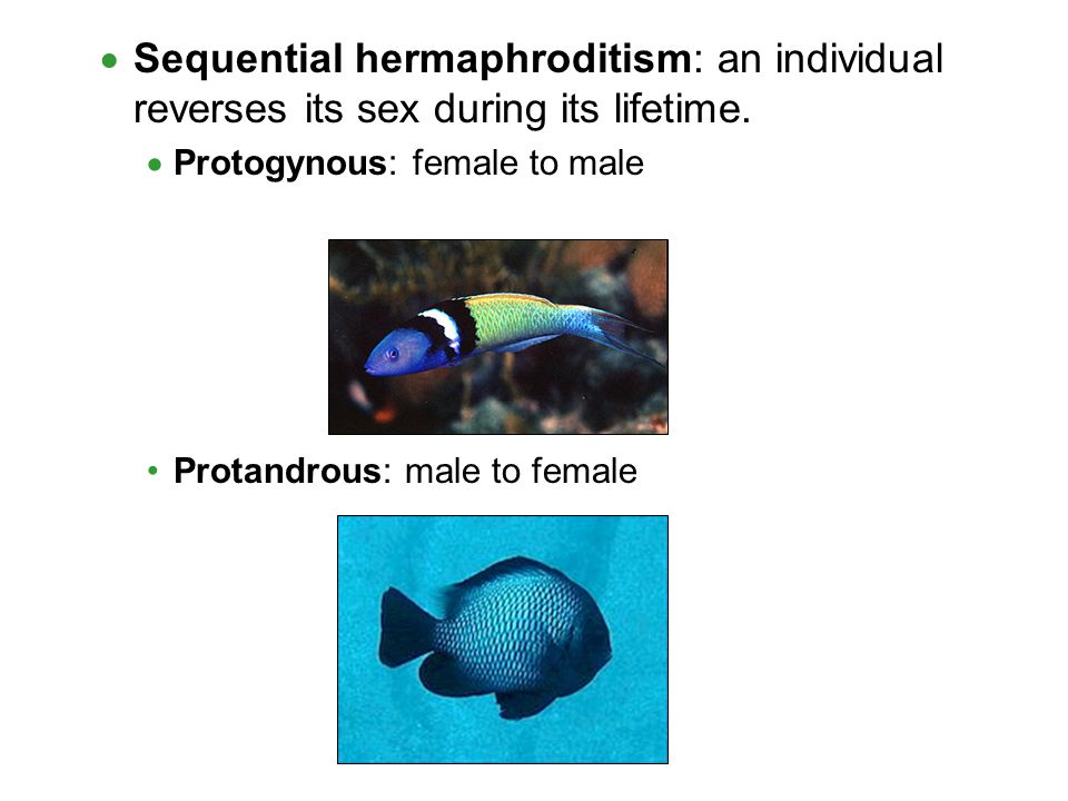 Sequential hermaphroditism: an individual reverses its sex during its lifetime.