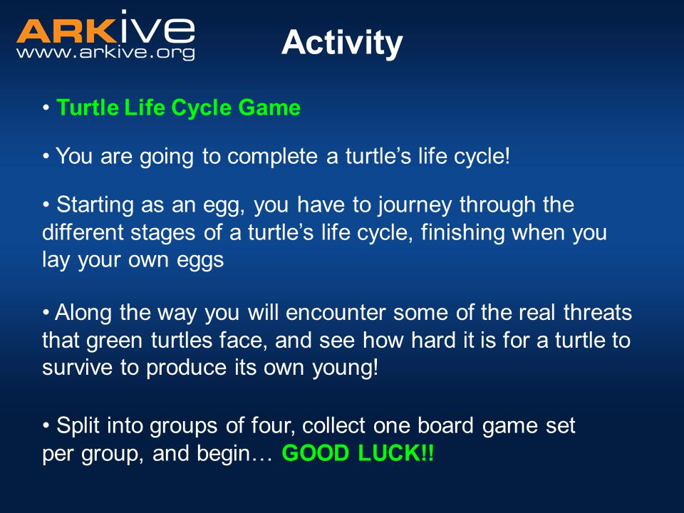 Activity Turtle Life Cycle Game