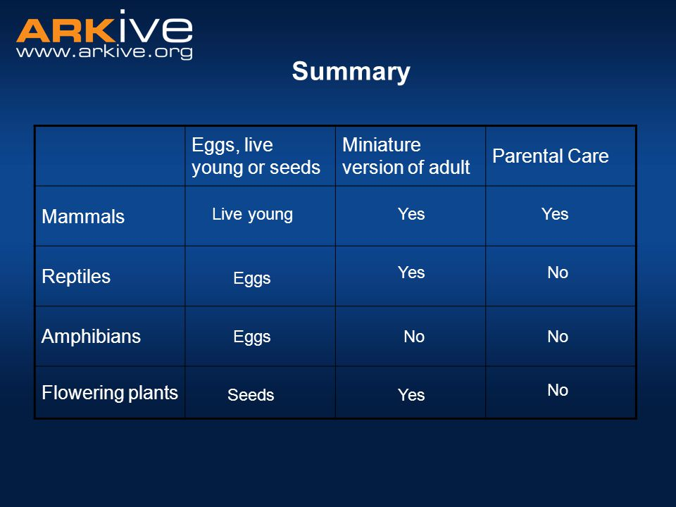 Summary Eggs, live young or seeds Miniature version of adult
