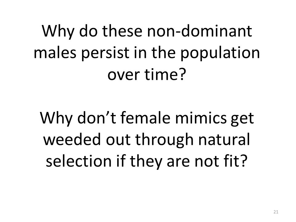Why do these non-dominant males persist in the population over time