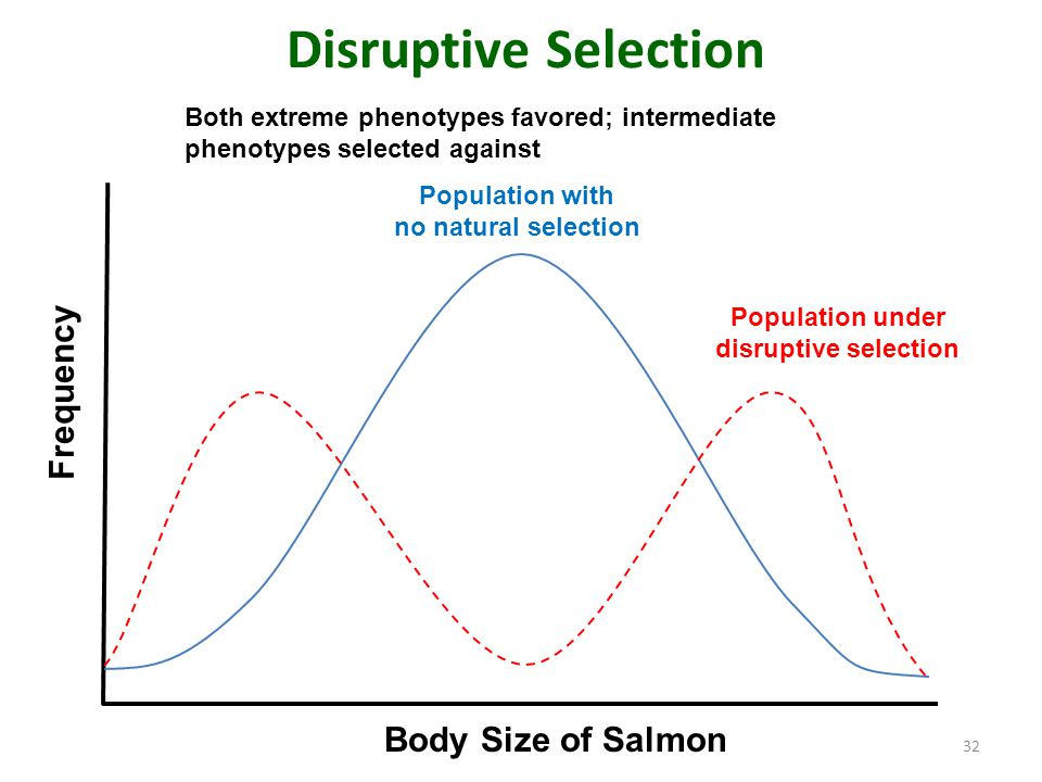 Disruptive Selection Frequency Body Size of Salmon