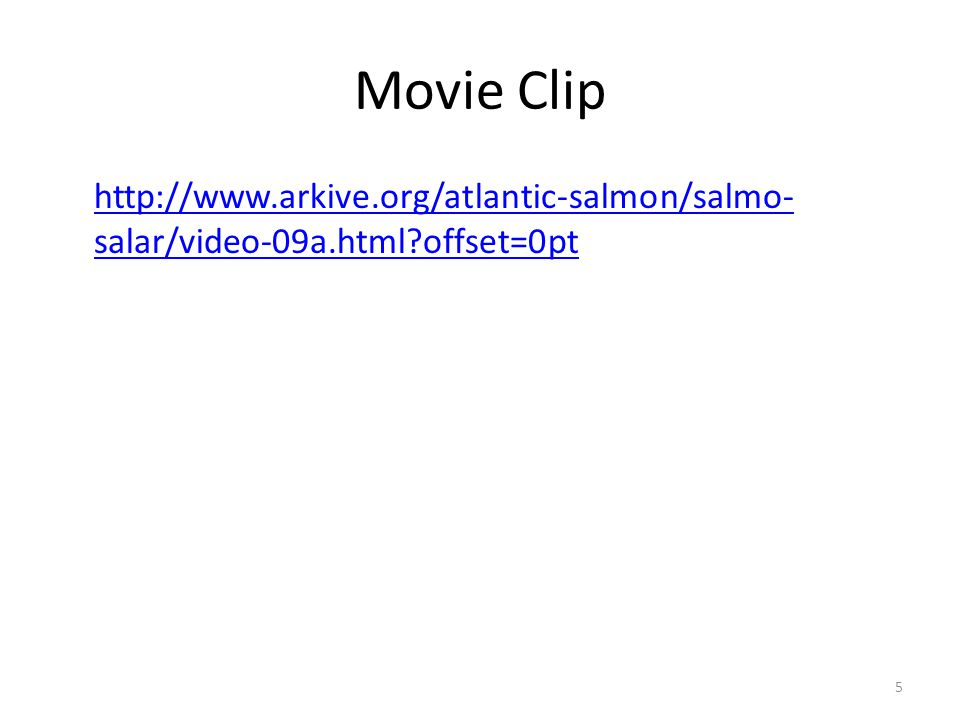 Movie Clip http://www.arkive.org/atlantic-salmon/salmo-salar/video-09a.html offset=0pt