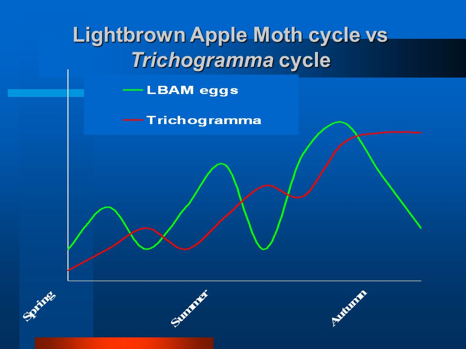 Lightbrown Apple Moth cycle vs Trichogramma cycle