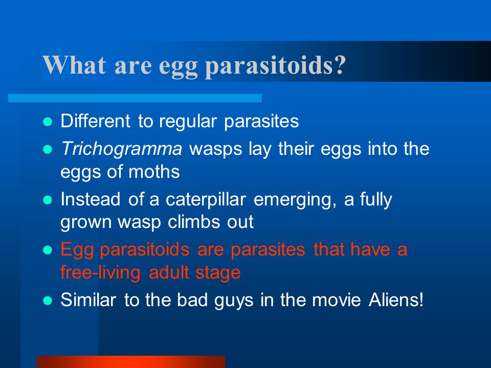 What are egg parasitoids