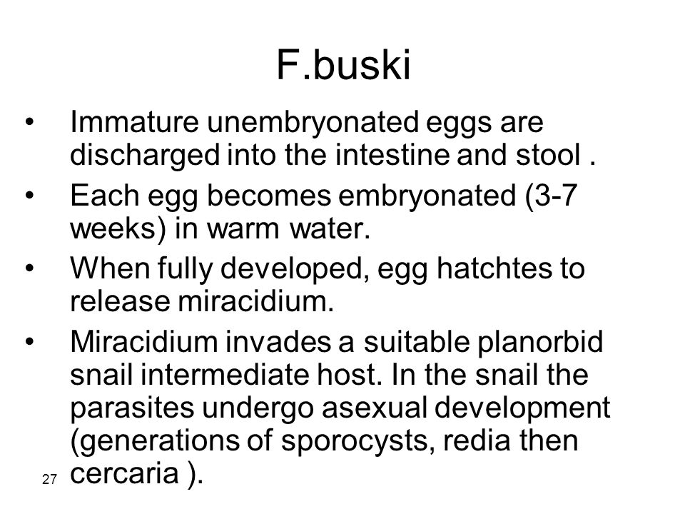 F.buski Immature unembryonated eggs are discharged into the intestine and stool . Each egg becomes embryonated (3-7 weeks) in warm water.