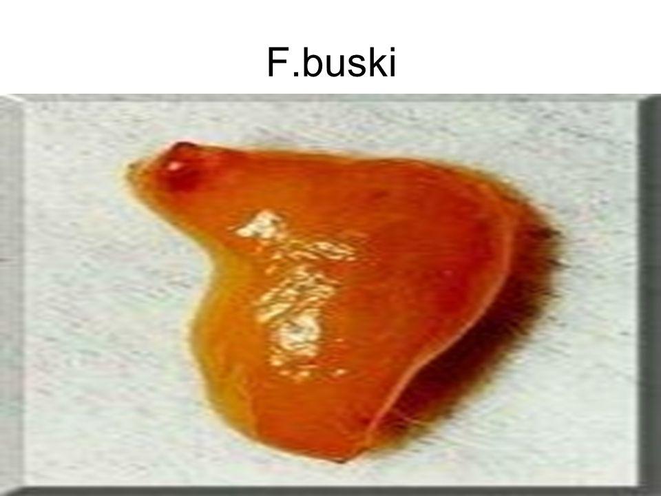 F.buski
