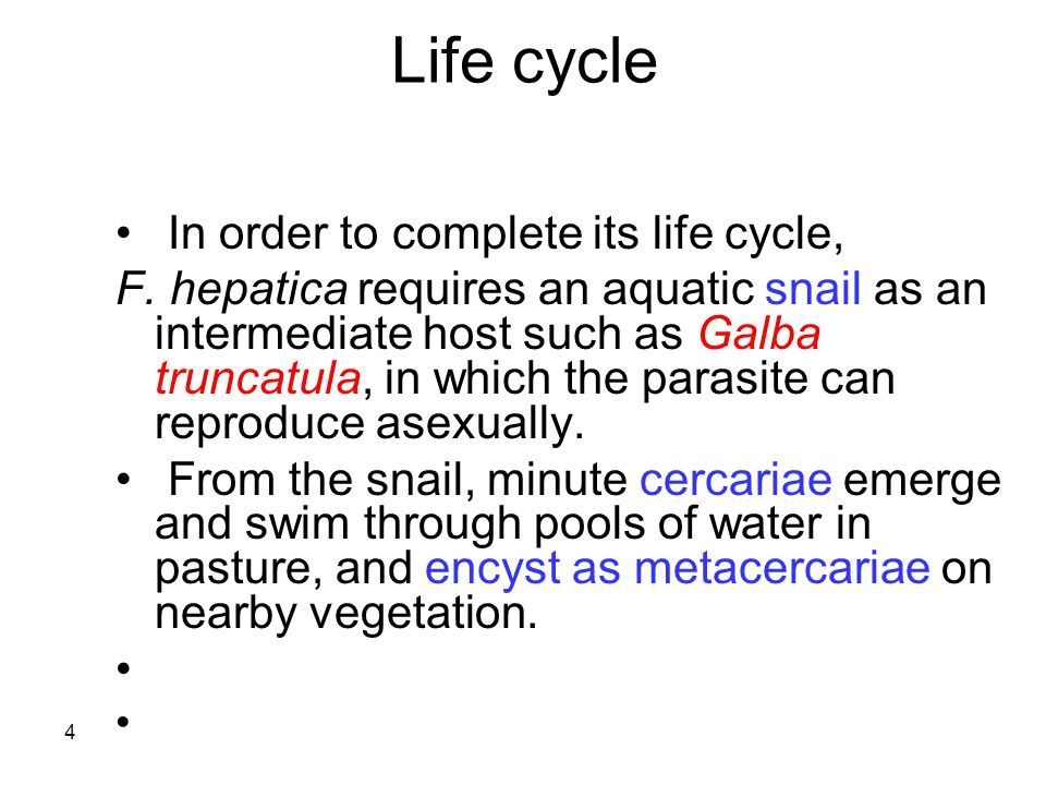 Life cycle In order to complete its life cycle,