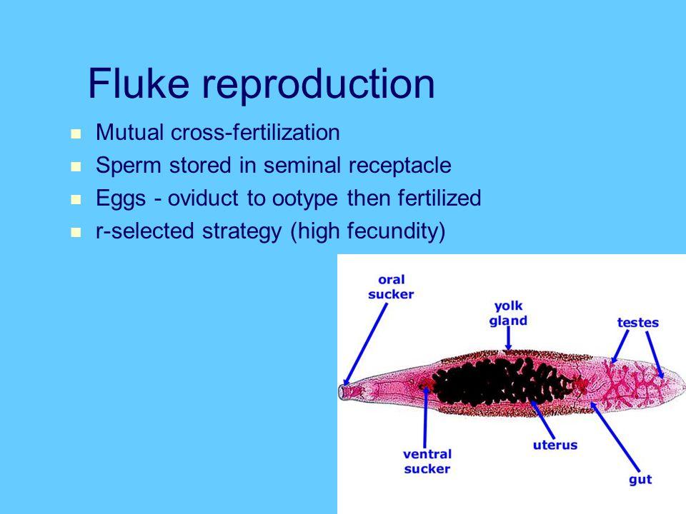 Fluke reproduction Mutual cross-fertilization